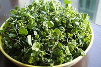 Watercress: A Super Alkaline Food – Watercress Recipes